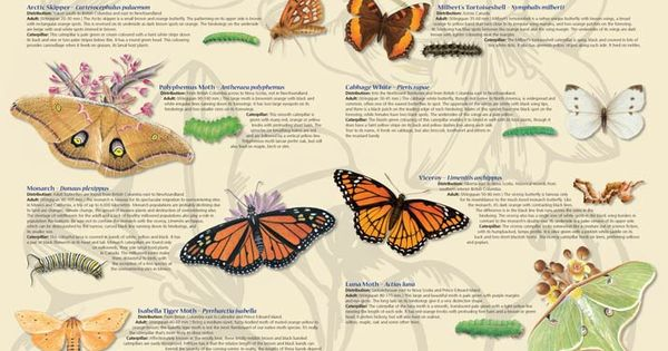 Another poster from CWF which would be great for classroom ...