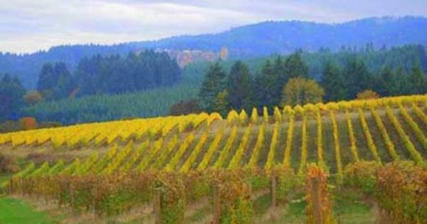 oregon wine country fall colors vineyard winery and custom home for sale vineyards for
