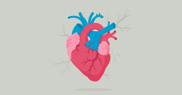 لا تحكموا على قلوبنا بالقسوة فهي هشة جدا ولكنها أحيانا تأخذ مكان العقل قليلا فيتبادلون الأدوار قل Nature Iphone Wallpaper Illustration Scientific Illustration