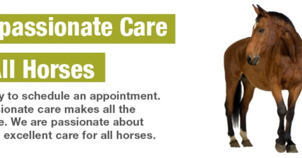 The Whole Horse Veterinary Clinic Veterinarian In San Marcos Tx Usa Upcoming Classes Veterinary Clinic Equine Care Veterinary