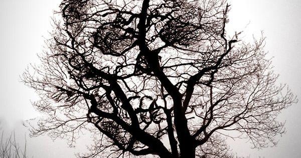 spooky/wicked skull tree silhouette || Halloween