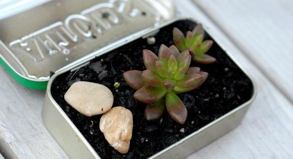 DIY Mini Garden in an altoid tin