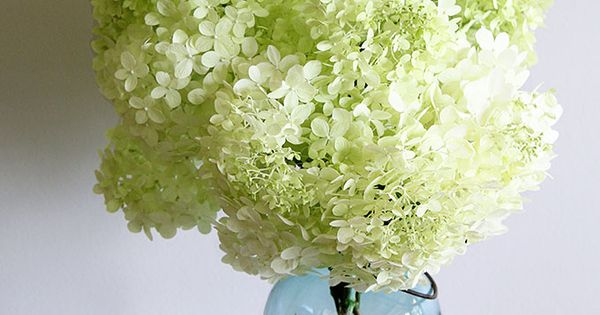 lazy girl 39 s guide to drying hydrangeas fleurs blanches fleur et d co. Black Bedroom Furniture Sets. Home Design Ideas