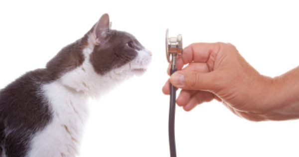 Up To 15 Of The General Cat Population Has Heart Disease But