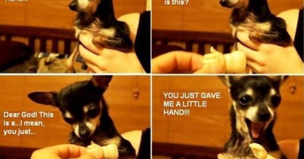 funny photos, dog little hand