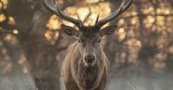 Desvre | Deer, Marketing and Planet earth