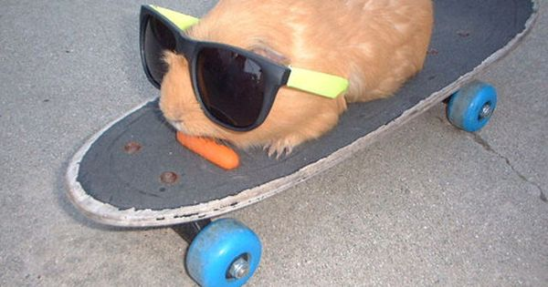 OMG!!!!!!Something cool on a skateboard - Funny animal in sunglasses sitting on
