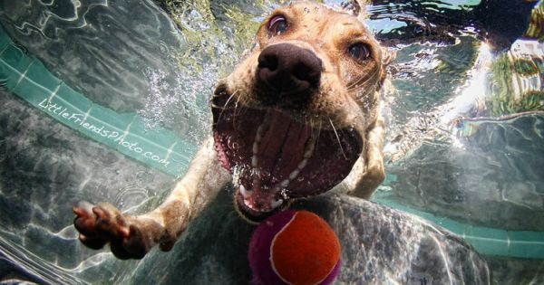 12 Underwater Photos of Dogs Fetching Their Ball. Brilliant! The photographer, Seth