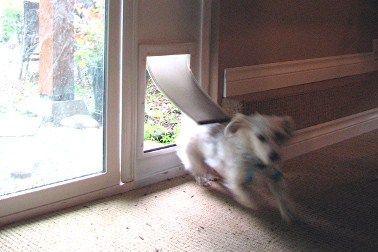 Build Your Own Dog Door For Sliding Doors Dog Door Pet Patio