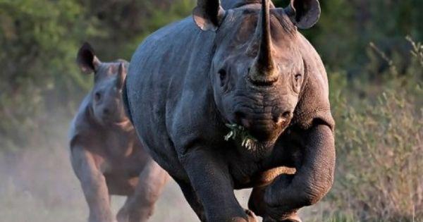 Angola+Animals | Sampath Speaking