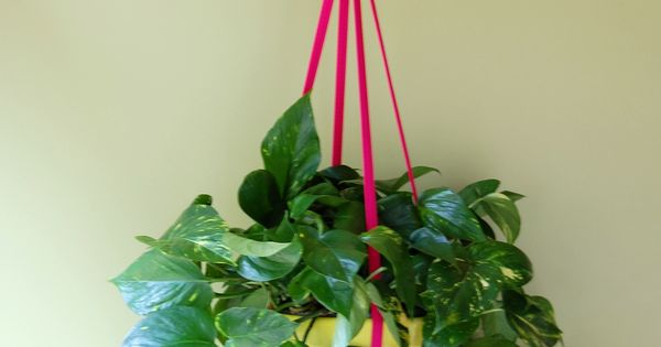 Small House Plants Home Depot: @Home Depot Sells These Amazing Fuchsia Fabric Plant