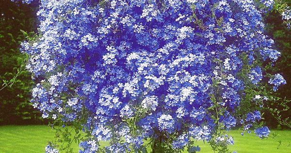 1 000 1 155 pixels garden pinterest k belpflanzen pflanzen und g rten. Black Bedroom Furniture Sets. Home Design Ideas