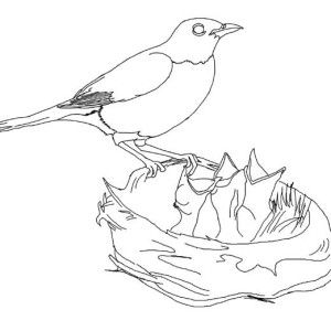 Robin Hungry Robin Babies Coloring Page Hungry Robin Babies