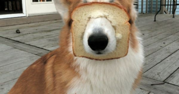 inbred animals - photo #5