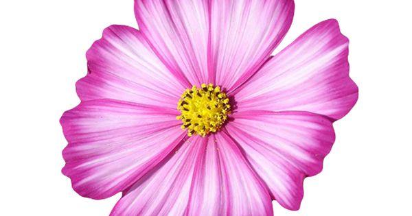 Gliterowe Dodatki Bez Tla Kwiaty Bloog Pl Flower Painting Floral Watercolor Oil Painting Flowers