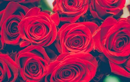 باقات ورد جميلة اجمل باقات ورد جميلة باقات ورد جميلة رومانسية Zina Blog Primitive Decorating Country Dollar Tree Diy Birthday Bloom