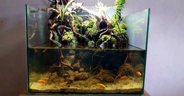 Tank Paludarium Nano Aquarium Terrarium Paludarium Riparium Vivarium In 2020 Terrariums Kits Nano Aquarium Terrarium