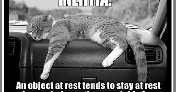 Inertia ねこ