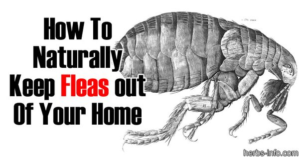 Keep Fleas Out Of Your Home Bug Repellents Lice Removal
