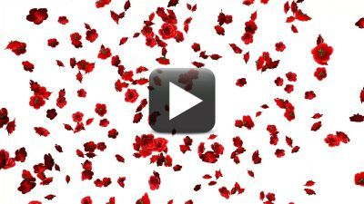 In This Video I Have Shown Rose Flowers Falling Animation Randomly And Created Full Hd And Loops Just D Rose Petals Falling Rose Flower Green Background Video