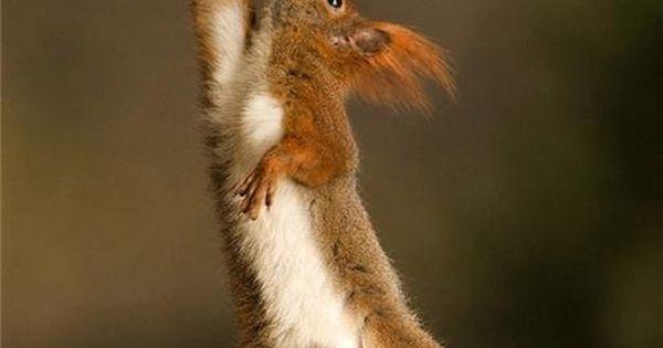 Amazing And Funny Pictures Of Wild Animals « kurakaniz