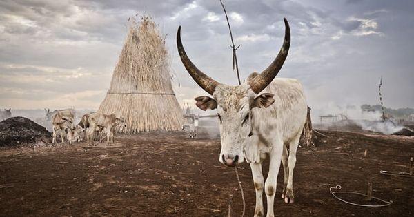 قبائل السودان
