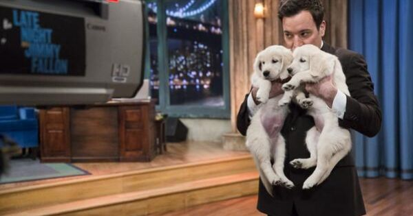 Jimmy Fallon with puppies! Love him!!