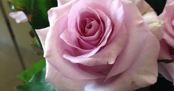 Pin by Debbie B on For Love of Roses | Pinterest ...