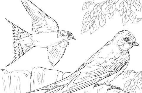 Realistic Barn Swallows Coloring Page From Swallows Category Select From 20946 Printable Crafts Of Cartoons Animal Coloring Pages Barn Swallow Coloring Pages