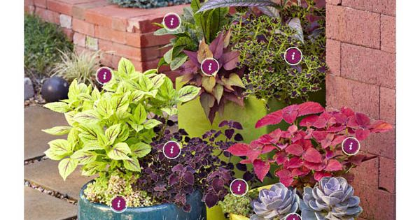 Great tips on potting plants better homes and gardens march 2013 fabulous foliage in - Better homes and gardens container gardening ...