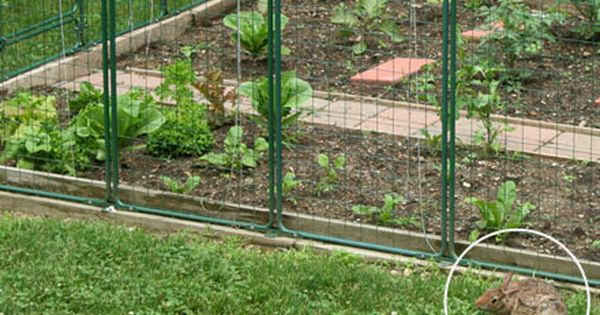 High Resolution Rabbit Fence For Garden With Images Fenced