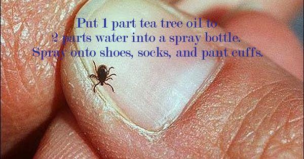 Natural Tick Repellant - 1 part tea tree oil to 2 parts