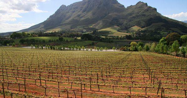 dating stellenbosch south africa