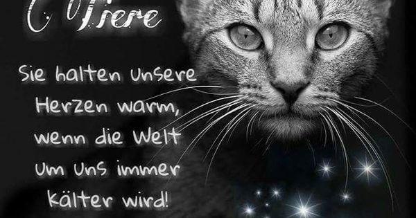 Warme Herzen Geliebte Katze Katzen Zitate Spruche Katze