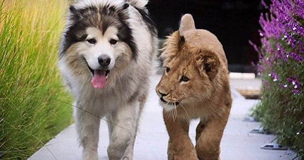 Theglobewanderer Just Strolling Around With My Best Bud Check Animals Friendship Funny Animal Pictures Animals Beautiful