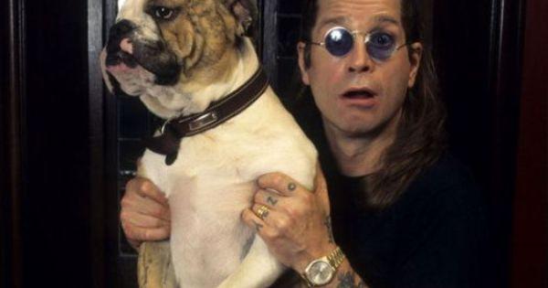 Cody The Screaming Dog Breed