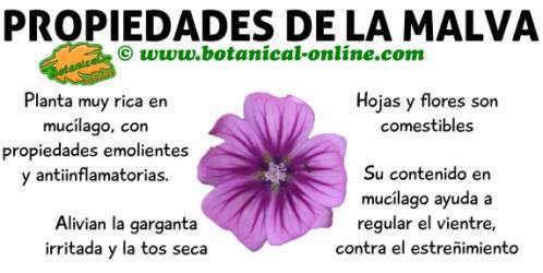 Pin De Magaly Fernández En Alimentos Plantas Medicinales Plantas Herbolaria