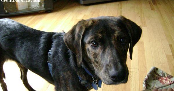 Plott hound, Saddles and Duke on Pinterest