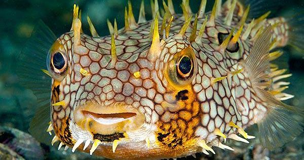 Images Of Underwater Photo Contest Winners Exotische Vissen Diepzee Waterdieren