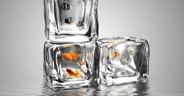 Aquarium Design Aquarium And Ice Cubes On Pinterest