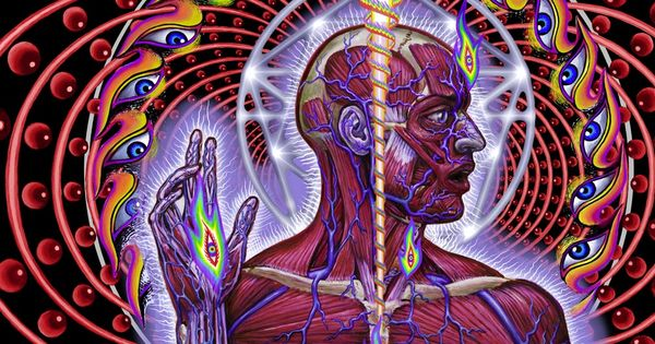 essay on alex grey Internet archive is a non-profit digital library offering free universal access to books, movies & music, as well as 333 billion archived web pages.