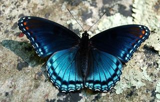 Butterfly Inspirations Butterfly Inspiration Butterfly Pictures Butterfly Wallpaper