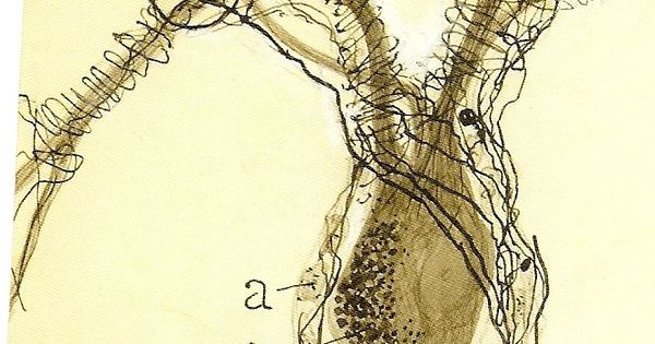 the father of modern neuroscience santiago ramon y cajal Santiago ramón y cajal is often called the father of neuroscience he won the nobel prize for physiology/medicine in 1906 for his theory that became known as the.