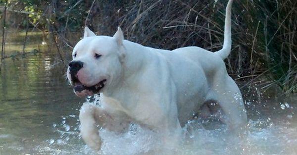Pin Em Dog Breed Loves