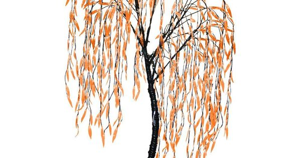 Have You Ever Seen An Orange Willow Tree? The Home Depot