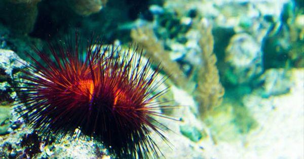 Recopilación De Animales Asexuales Cuya Reproducción Requiere Solo De Un Padre Y Que Tiene Como Resultado Que Los Descend Animales Nutria De Mar Erizos De Mar