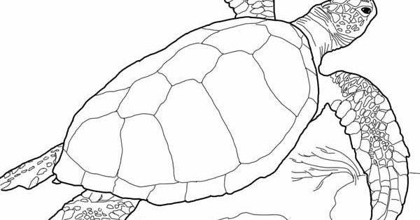 sea turtle loggerhead sea turtle coloring page wine