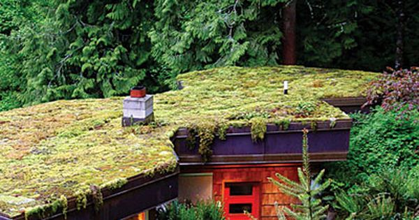 Small Space Gardening How To Garden Anywhere Green Roof Garden Roof Garden Small Space Gardening