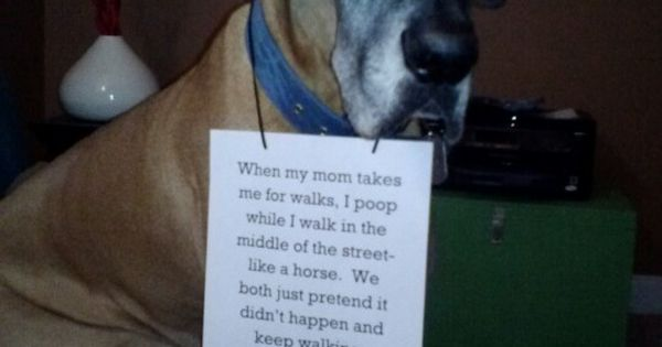 How To Keep A Dog From Eating Horse Poop