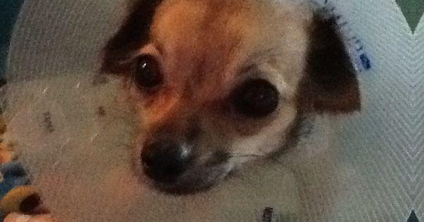 Waco Tx Texas Cute Animals Pets Puppies